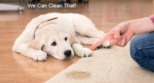Pet Stain Odor Removal Lexington KY